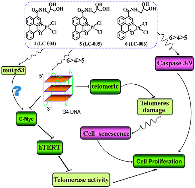 Proposed antitumor mechanisms for chiral platinum(II) complexes 4–6.