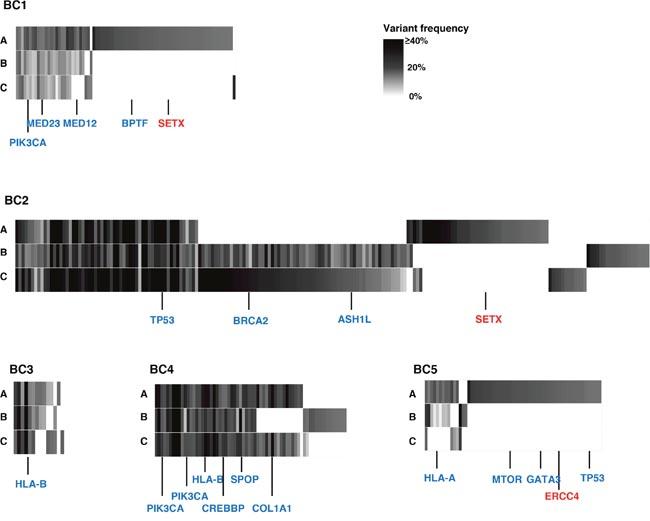 Genetic intra-tumoral heterogeneity in five breast tumors.