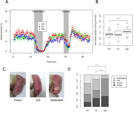 Analysis of basic physiological functions at birth reveals a strong decreased milk intake for homozygous KI Alk