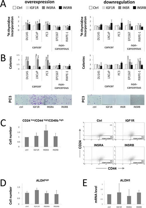 IGF1R/INSRA expression levels influence PCa cell proliferation and colony formation potential but have minor effects on cancer stem/progenitor cell marker levels.