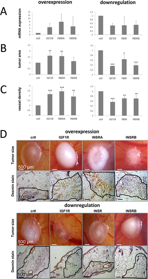 IGF1R/INSR expression levels influence tumor growth and tumor-infiltrating blood vessel density