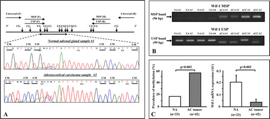 Methylation analysis of clinical samples.