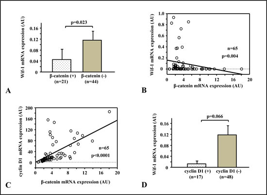 Relationships of β-catenin with Wif-1 and Wnt target genes.