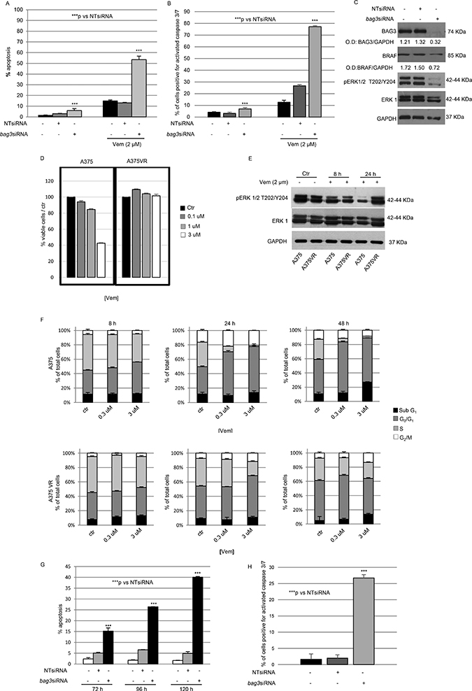 Down-regulation of BAG3 sensitizes A375 cell line to Vemurafenib via ERK pathway.