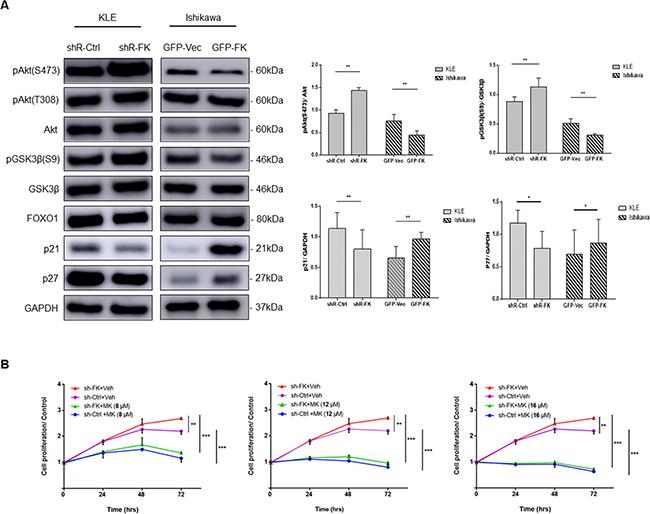 FKBP51 regulates endometrial adenocarcinoma cell growth by inhibiting Akt.