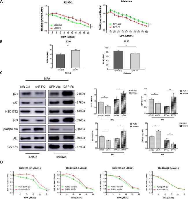 FKBP51 modulates MPA sensitivity by inhibiting Akt.