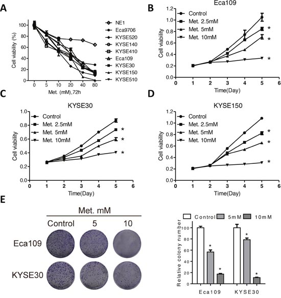 Metformin inhibits cell viability of ECSS cells.