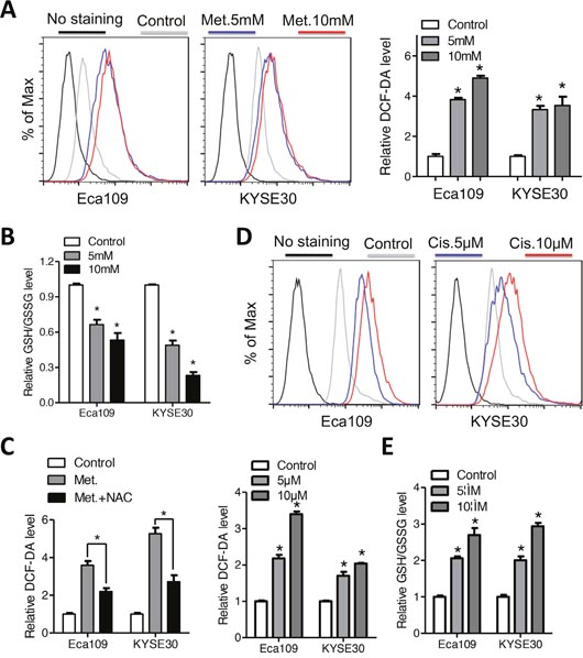 Metformin and cisplatin induces intracellular ROS accumulation in Eca109 and KYSE30 cells.