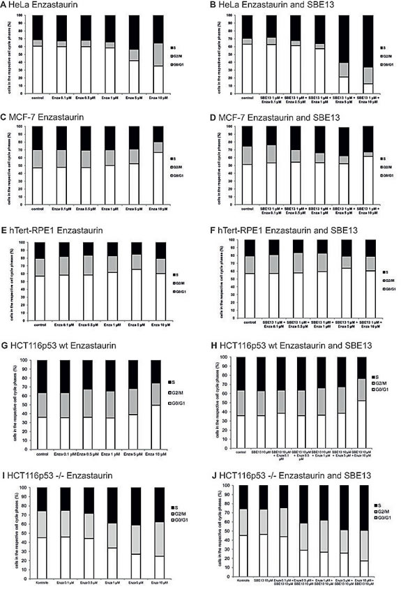 Effect of Enzastaurin and SBE13 on cell cycle distribution of HeLa, MCF-7, hTERT-RPE1 and HCT116p