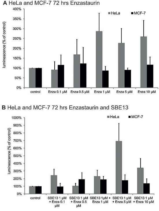 Caspase 3/7 assays in HeLa and MCF-7 cells 72 hrs after treatment with Enzastaurin and SBE13.