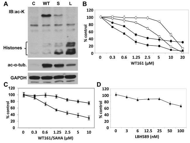 WT161 triggers cytotoxicity in breast cancer cell lines.