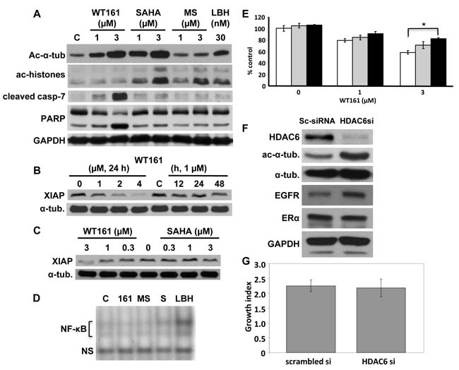 HDAC6 inhibition does not solely account for WT161-induced cytotoxicity.