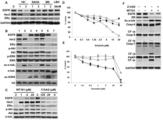 HDAC inhibitors differentially downregulate receptor expression.