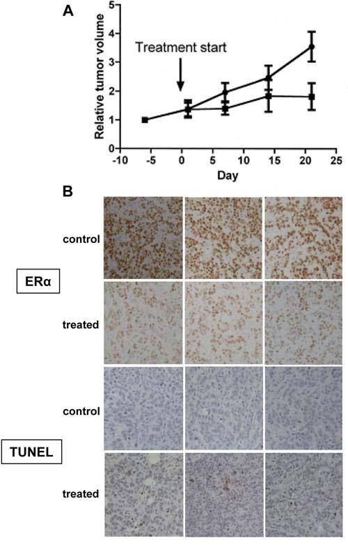 Anti-tumor efficacy of WT161 in MCF7 xenograft tumors.