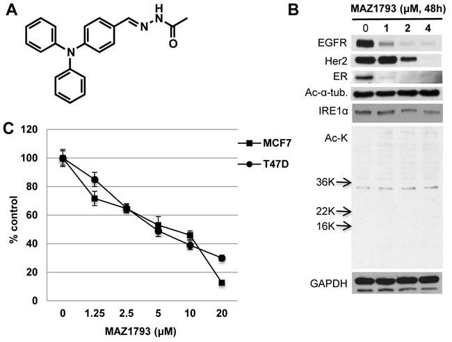 MAZ1793 induces growth inhibition in breast cancer cells.