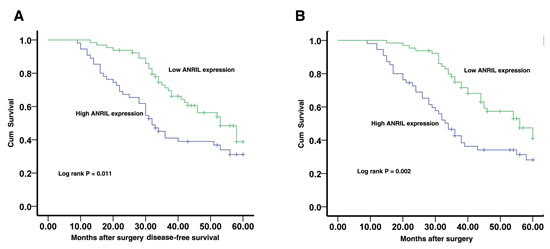 Figure 2:The correlation between ANRIL expression and the DFS or OS of gastric cancer patients.
