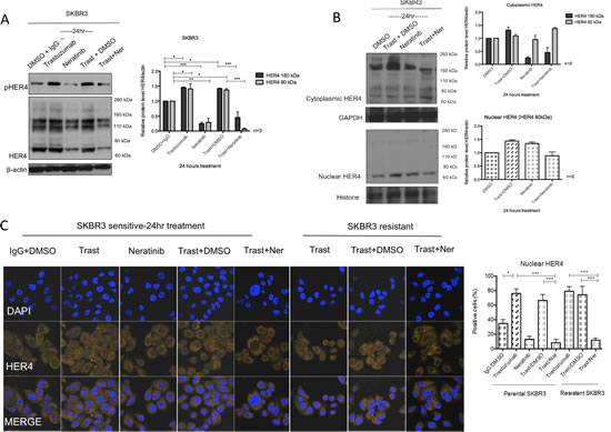 Neratinib prevents nuclear HER4 translocation induced by trastuzumab in vitro and in vivo.