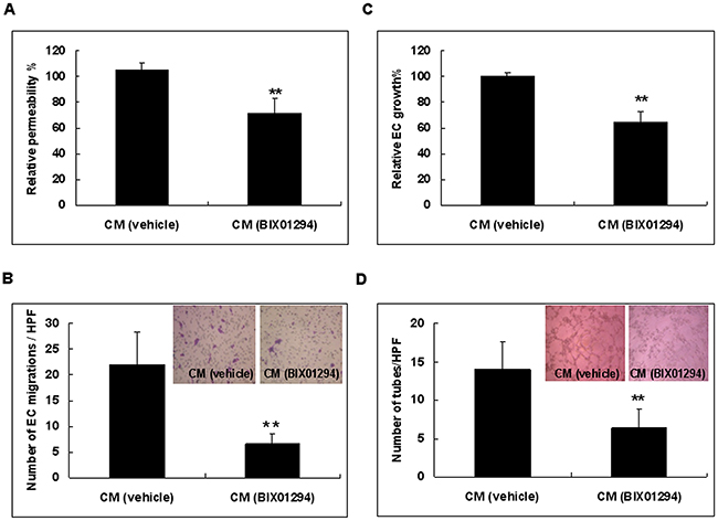 Cervical cancer cells treated with conditioned medium from BIX01294 lose angiogenic capability.