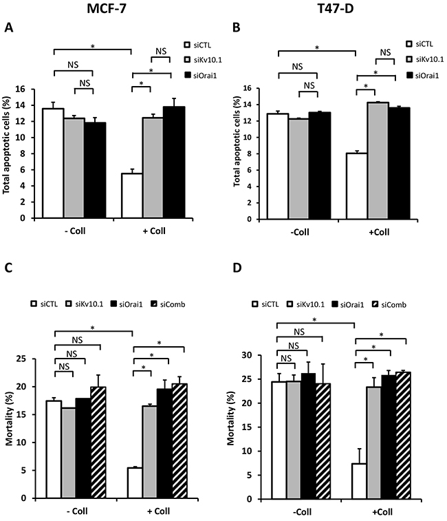 Kv10.1 and Orai1 are involved in collagen-dependent survival of BC cell lines.