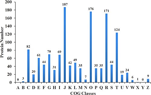 Distribution of cluster of orthologous groups (COG) analysis of the indentified proteins.