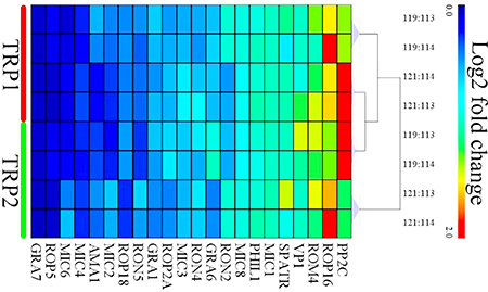 Heat map clustering of the intensities of the differentially expressed (DE) virulence proteins of oocysts between PYS strain and PRU strain.