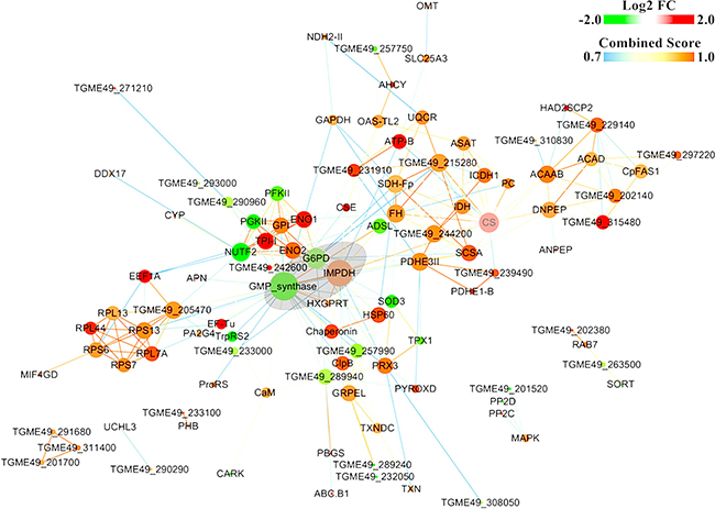 Constructed protein-protein interaction (PPI) networks of the DEPs.