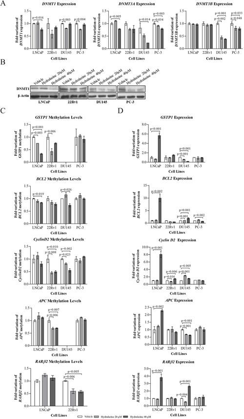 Impact of hydralazine on specific gene methylation of PCa cells.