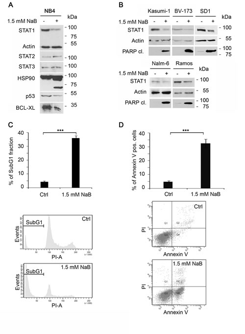 Butyrate alters STAT1 levels and expression of its target genes in NB4 cells.