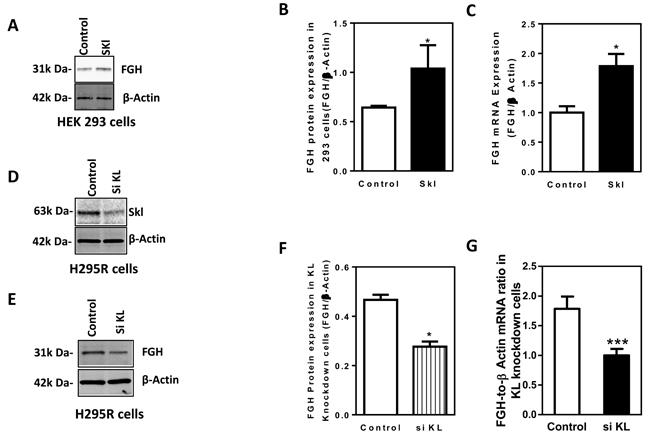 Skl regulates FGH expression.