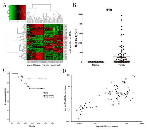 Fig1: H19 and miR-675 are systematically up-regulated in gastric cancer and H19 has prognostic value for survival.