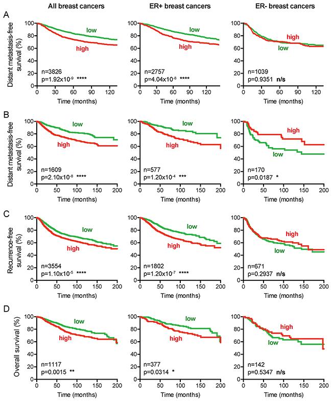 CENPI overexpression is a marker for poor survival in ER+ but not ER- breast cancer.