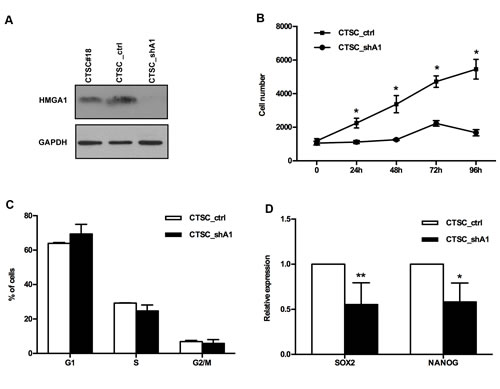 HMGA1 knockdown affects the proliferation and cell cycle of CTSCs.