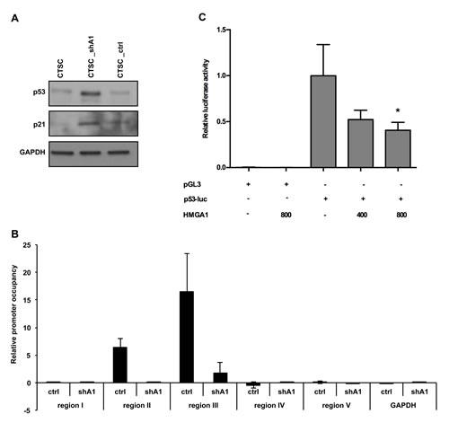 HMGA1 negatively regulates p53 expression at the transcriptional level.