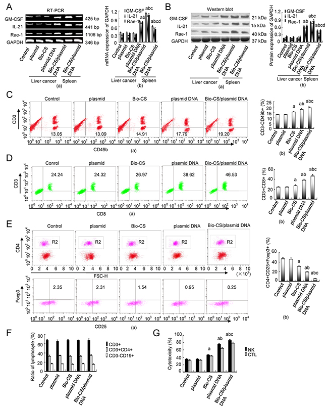Bio-CS/plasmid DNA nanoparticles increase cellular immunity in mice with orthotopic liver cancer.