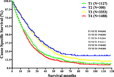 Survival analysis based on T stage in mRC.