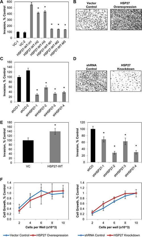 Sustained increases in HSP27 increase PCa cell invasion.