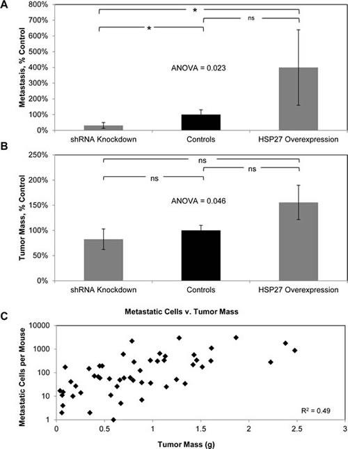 HSP27 increases PCa metastasis as well as tumor growth.