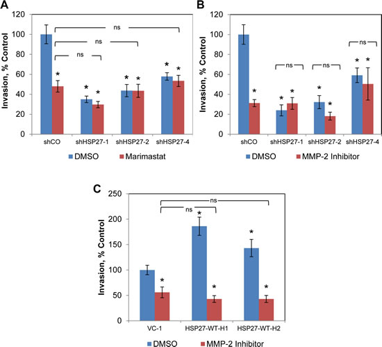 HSP27-driven cell invasion is dependent upon MMP-2.