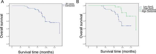Relationship between low Sun2 expression and outcome of patients with prostate cancer.