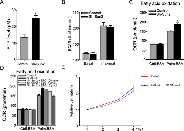 Sun2 suppresses the fatty acid oxidation (FAO) in prostate cancer.