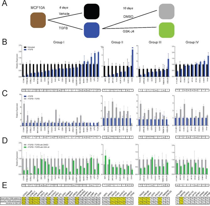 KDM6A inhibition by GSK-J4 blocks reactivation of bivalent genes.
