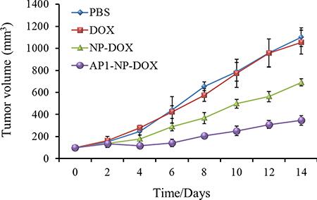 Tumor inhibition after treated with PBS, free DOX, NP-DOX and AP1-NP-DOX at the DOX dose of 10 mg/kg n = 6.