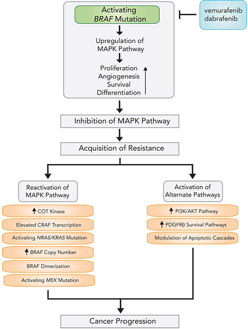Mechanisms and pathways of acquired resistance following BRAF inhibitor therapy.