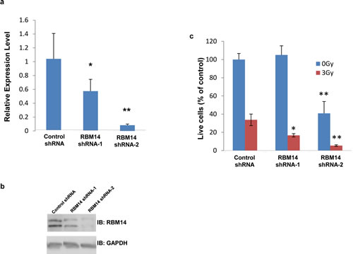 Effects of RBM14 knockdown on clonogenic survival of GBM spheres.