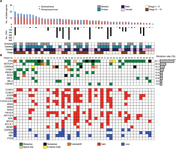 Summary of somatic mutations and CNVs across 47 OSCC samples.