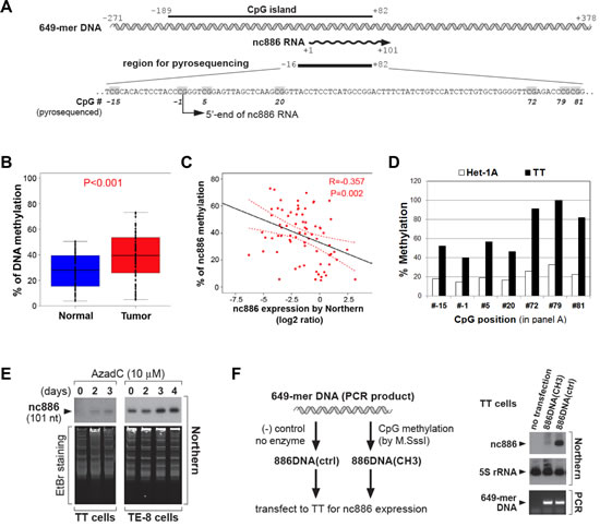 CpG DNA methylation of the nc886 promoter region as a cause for suppression of nc886 RNA expression.