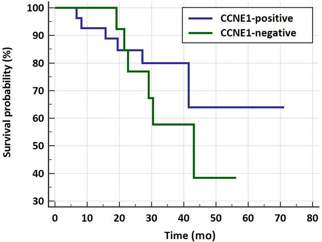 Kaplan-Meier survival curve for CCNE1- positive vs. negative HGSOC patients.