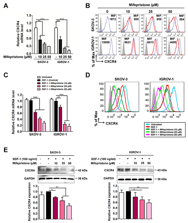 Mifepristone decreases the expression levels of CXCR4 in a concentration-dependent manner in SKOV-3 and IGROV-1 cells.