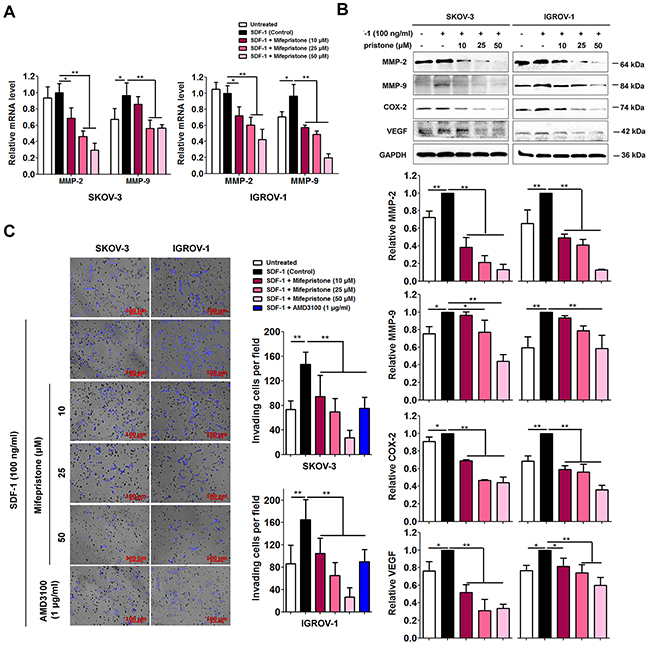 Mifepristone reduces expression of MMP-2, MMP-9, COX-2 and VEGF, and the related cell invasion in SKOV-3 and IGROV-1 cells.