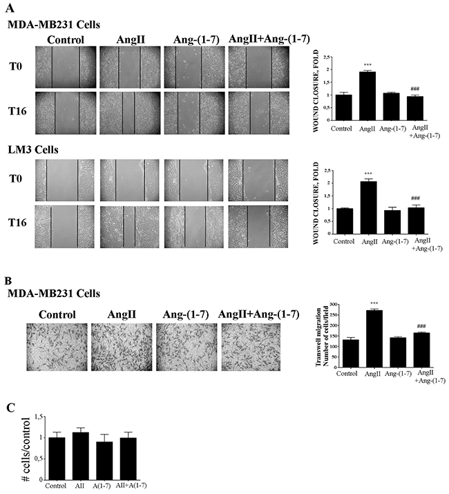 Ang-(1-7) blockes AngII induced tumor cell migration.